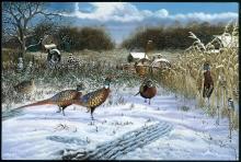 Pheasant_1
