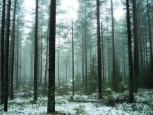 hunting_finland_3