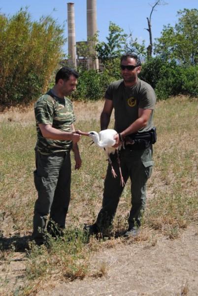 κυνηγοί σώζουν πελαργό