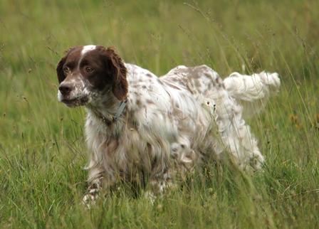 Εγκύκλιος με τις Υποχρεώσεις των Ιδιοκτητών Κυνηγετικών Σκύλων