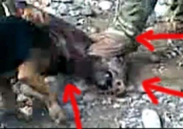 Σχηματίστηκε δικογραφία για την κακοποίηση αγριογούρουνων από κυνηγούς