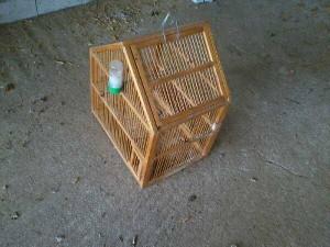 σύλληψη παράνομου για παγίδευση πουλιών με δίχτυα
