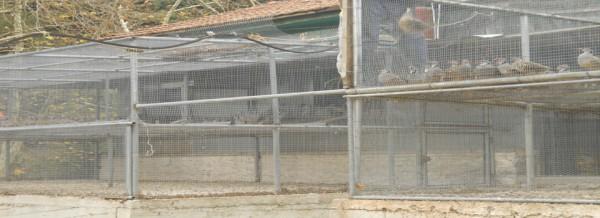 klovos 14-11-2011 003