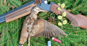 Woodcock with hunting attributes