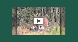 deer_attacks_hunter