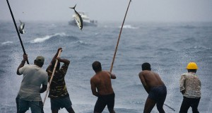 tuna-catchers