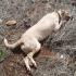 dead_dog1