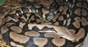 python_main