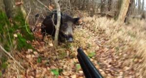wild_boar_attack