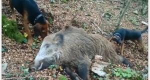 wild_boar_hunting