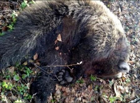 bear_injures_woman2