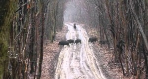 wildboar_hunting
