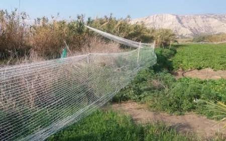 Το δίχτυ τοποθετήθηκε για να αποτρέψει τα πλατόνια να προξενήσουν ζημιά στην αγροτική καλλιέργεια. Συχνά λειτουργεί ως θανατηφόρα παγίδα.