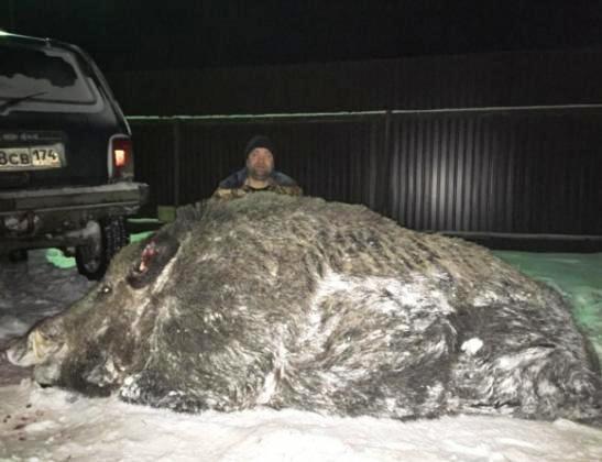 russian hunter wild boar2