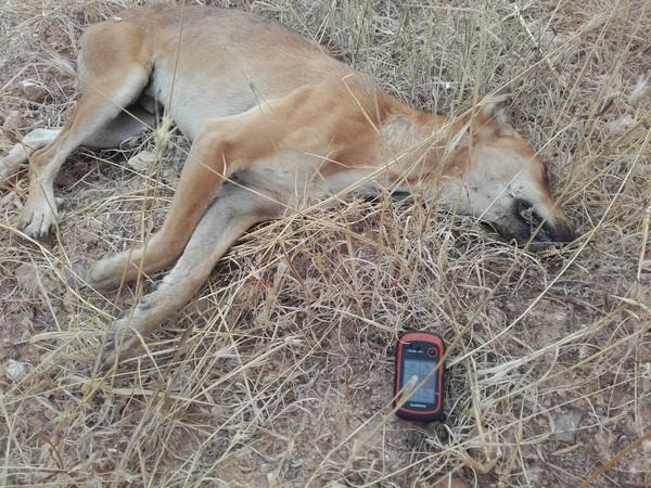Ευρήματα της 27ης-8-2016 όταν η Ντάικα με τον Σπύρο επιχείρησαν στην περιοχή Ξηροπήγαδο, κοντά στον οικισμό Γάλιπε Ηρακλείου